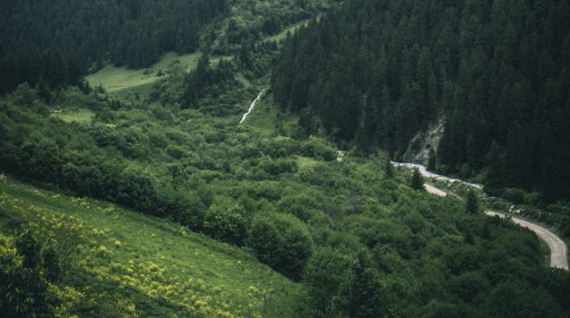 View of a green valley in the alps filled with woods.